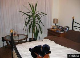 室内卧室盆栽图片